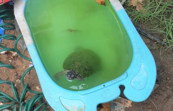 תושבת גבעת אולגה נקנסה על גידול צבי ביצה בניגוד לחוק