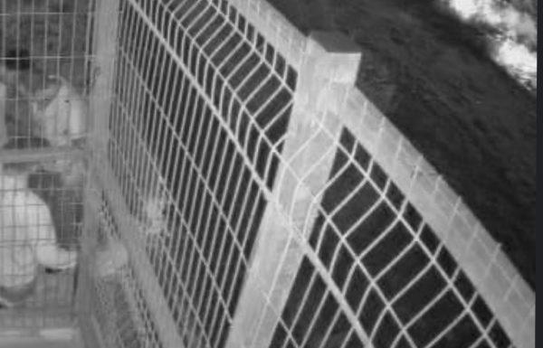 בלעדי: מצלמות האבטחה תיעדו את מעשי הוואנדליז