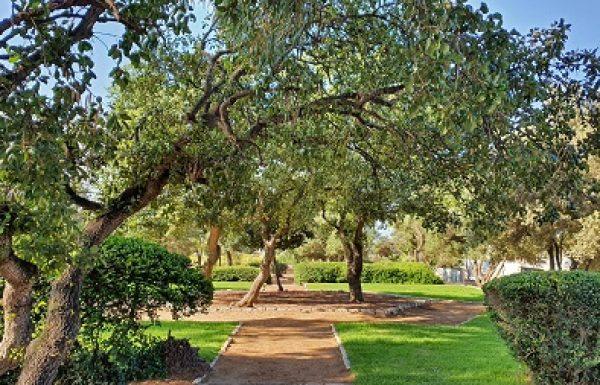 המועצה תחלק עצים ושיחים לתושבים כחלק מפרויקט ייחודי להצללת המרחב הציבורי